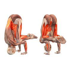 Pose de grúa, la cabeza en el tapete - Bakasana, la cabeza en el tapete - Yoga Poses   YOGA.com