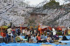 円山公園 花見、屋台