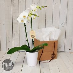 Tropical Orchid Plant