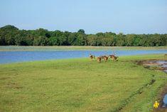 2015.02.25 Sri Lanka (1450) Safari familial Wilpattu