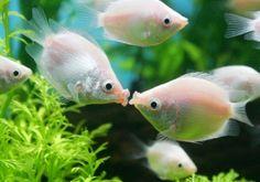 Let's Kiss - The Fish Kiss