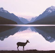 Perfect morning at Bowman Lake in Montana  Photo by @forrestmankins  #modernoutdoorsman by modernoutdoorsman