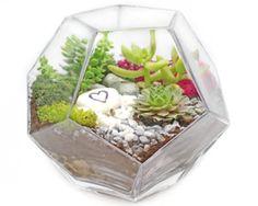 Succulents in Geometric Prism Glass Terrarium