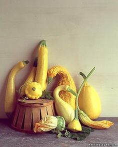 """See the """"Summer Squash"""" in our Vegetable Growing Guide gallery"""