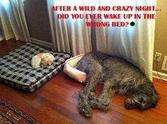 Wake Up in the Wrong Bed?