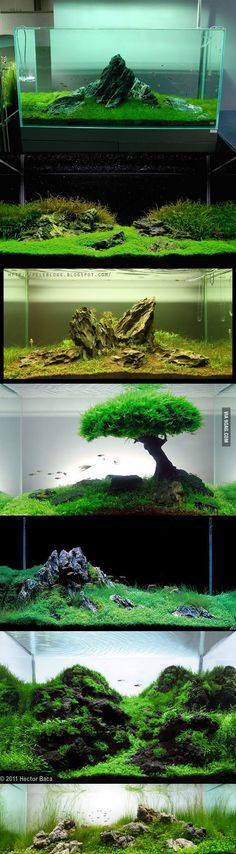 HOLY CRUD I AM TOTALLY GEAKIN' OUT RIGHT NOW!!! AWESOME FISH TANKS!!!!