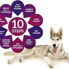 10 home made recipes for kidney failure dogs kidney diet recipes 10 home made recipes for kidney failure dogs kidney diet recipes pinterest kidney failure dog and dog food forumfinder Image collections