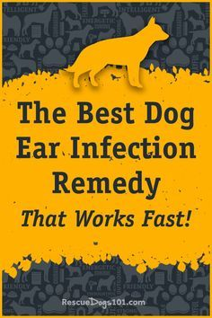Secret to Getting Rid of Ear Infections in Your Dog at Home Best dog ear cleaner for effective treatment of yeast infections.Best dog ear cleaner for effective treatment of yeast infections. Ear Infection Remedy, Dogs Ears Infection, Yeast Infection Treatment, Cleaning Dogs Ears, Ear Cleaning, Dog Health Tips, Pet Health, Yeast In Dogs Ears, Meds For Dogs