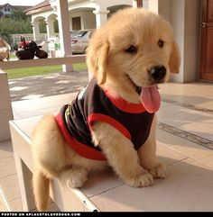 Puppy with beautiful clothes #cute #animals