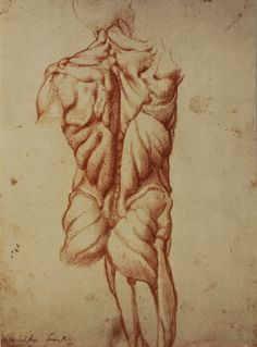 Michelangelo: Anatomy Studies