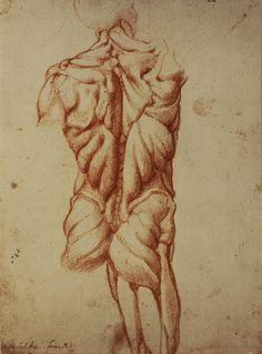 Michelangelo: Anatomy Studies
