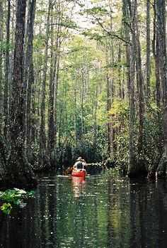 Went in Swamp. Largest in North America at 700 square miles. Located between Georgia and Florida. Great Places, Places To See, Beautiful Places, Old Florida, Vacation Pictures, Adventure Is Out There, Vacation Spots, The Great Outdoors, Kayaking