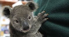 10 Unexpected Things I Learned About Australian Wildlife Working as a Park Ranger