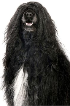 Funny animals: 100 Funny cute animals-I think it's time for a haircut