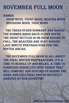 How the November full moon informs our lives.