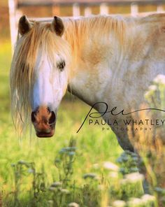 Welsh Pony photo Nature Photography Horse by whatleyphotography