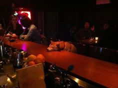 passed out at the bar