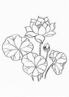 рисунок лотос - Поиск в Google
