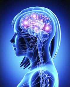 Eén bekende darmbacteriesoort blijkt het sociale gedrag om te keren dat kenmerkend is bij autisme (ASS). Probiotica brengt snel veranderingen in breinactiviteit, connectiviteit en gedrag. Ee…