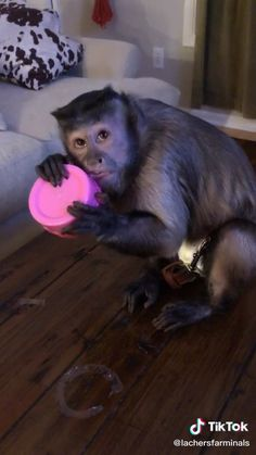 ‪Just a monkey that loves to play with slime - cute animals Cute Little Animals, Cute Funny Animals, Funny Cute, Cute Dogs, Cute Babies, Animal Jokes, Funny Animal Memes, Funny Animal Pictures, Cute Animal Videos