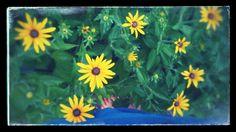 Sonnenschein  Plants, Sunshine, Plant, Planets