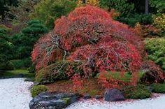 """Résultat de recherche d'images pour """"jardin japonais  murid an"""""""