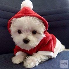 Ni Santa Claus se ve tan bien con su traje como estos pequeños