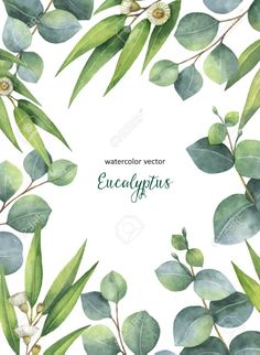Watercolor vector hand painted green floral card with eucalyptus leaves and branches isolated on white background. Healing Herbs for cards, wedding invitation, save the date or greeting design. Stock Vector - 84283112
