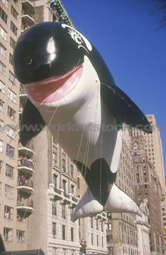 macys balloons | Willy The Orca Balloon In Macys Thanksgiving Day Parade New York City ...
