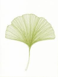 Image result for tatuajes de hojas ginkgo
