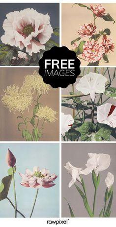 Vintage Wall Art Prints Diy 26 Ideas For 2020 Printable Images, Free Printable Art, Free Printables, Cool Art Drawings, Free Graphics, Vintage Wall Art, Vintage Paper, Free Prints, Botanical Prints