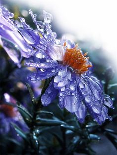 beautiful flower with raindrops