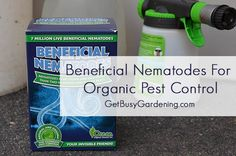 Purchase beneficial nematodes as a form of organic pest control and spray them around your yard and garden to kill Japanese beetle larvae.