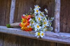 Florile Tominei:                Despre pajisti si adieri de  vant New Hobbies, Plants, Flora, Plant