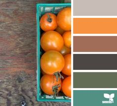 Design Seeds for color palettes Colour Schemes, Color Combos, Color Patterns, Colour Palettes, Color Mix, Living Colors, Design Palette, Color Harmony, Design Seeds