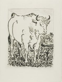 Pablo Picasso   The Bull, from Histoire naturelle, 1936,   Aquatint, sugar lift etching, and drypoint on ivory laid paper  272 x 208 mm