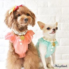Baby Doll Top- Shop By Designer - Wooflink Collection Posh Puppy Boutique I Love Dogs, Puppy Love, Cute Dogs, Pet Fashion, Animal Fashion, Dog Pictures, Animal Pictures, Designer Dog Clothes, Baby Dogs
