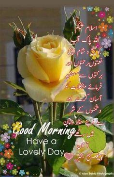 Morning Dua, Morning Prayer Quotes, Good Morning Msg, Morning Rose, Good Morning Flowers, Good Morning Picture, Morning Prayers, Good Morning Quotes, Beautiful Morning Messages