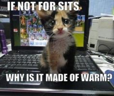 kitty logic Source by leeani videos wallpaper cat cat memes cat videos cat memes cat quotes cats cats pictures cats videos Baby Animals, Funny Animals, Cute Animals, Wild Animals, Funniest Animals, Puppy Pictures, Funny Animal Pictures, Animal Pics, Animal Captions