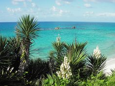 Bermuda is near the top of my travel list: close by, tropical, and british....