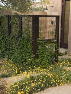 """L-shaped screen that doubles as a trellis for climbing vines. The wire mesh panels are fabricated with industrial screening, available in a wide array of gauges. Metal posts hold the panels, and everything has been allowed to weather naturally."""