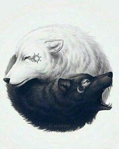 ein weißer und ein schwarzer wolf, die sich umarmen   noch eine idee für einen tollen wolf tattoo