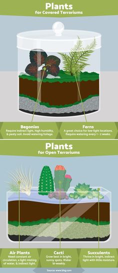 Terrariums: Best Plants to Grow