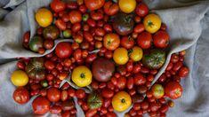 Garden Growing Marigolds, Canning Tomatoes, Fruit, Garden, Plants, Pickled Tomatoes, Garten, Lawn And Garden, Gardens