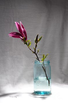 Purple And Blue Photograph  All prints by Randi Grace Nilsberg can be ordered ready to hang from the portfolio at http://fineartamerica.com/profiles/randi-grace-nilsberg.html?tab=artworkgalleries Prints are available on canvas, metal, acrylic, etc framed or unframed and as greeting cards.   A LIMITED NUMBER OF SIGNED NUMBERED PRINTS CAN BE PURCHASED DIRECTLY FROM THE ARTIST!