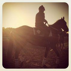 Horses training at #Lonestarpark