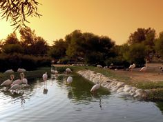 Flamingos In An Oasis In The Desert
