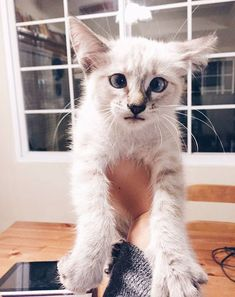 15+ Adorable Googly Eye Cats That You Will Love - #cat #kittens #pets #animals #cute #funny #paw #best #memes #photo #catfood #kitty #best #funniest #love #cute cats #purr