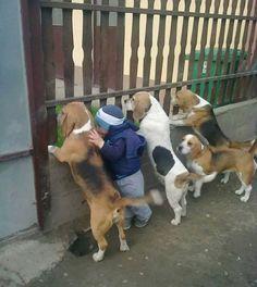 どんなに熱狂的な猫派でも思わず「ワンコもエエやん!」ってなる犬画像集 | ロケットニュース24