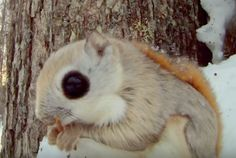 The 7 Coolest Squirrels You've Never Seen